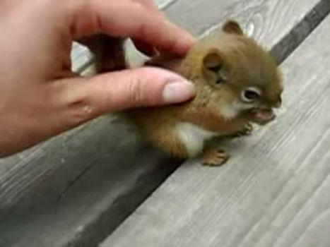 Einmal Eichhörnchen-Baby streicheln für alle