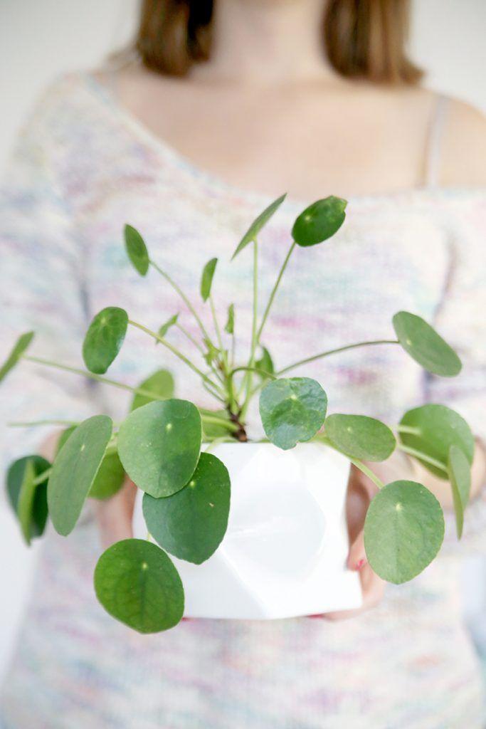 Darf ich vorstellen? Das ist meine Pilea. Oder mein chinesischer Geldbaum. Oder meine Ufopflanze. Oder… hat viele Namen, auf jeden Fall, das gute Pflänzchen! Ich habe ein ganz besonderes Faible für alle Pflanzen, von denen man selbst einfach und unkompliziert Ableger nehmen kann. Die Pilea hatte ich ursprünglich nur gekauft, weil sie enorm fancy aussieht,...