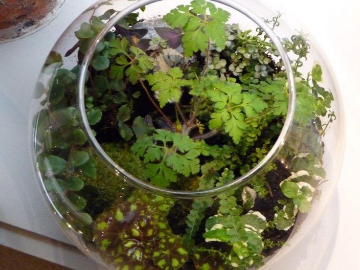 Terrarium miniature créé par Kali Vermes, exposition Plantariums, Librairie Le Cabanon, Paris 12e (75), 28 avril 2011, photo Alain Delavie