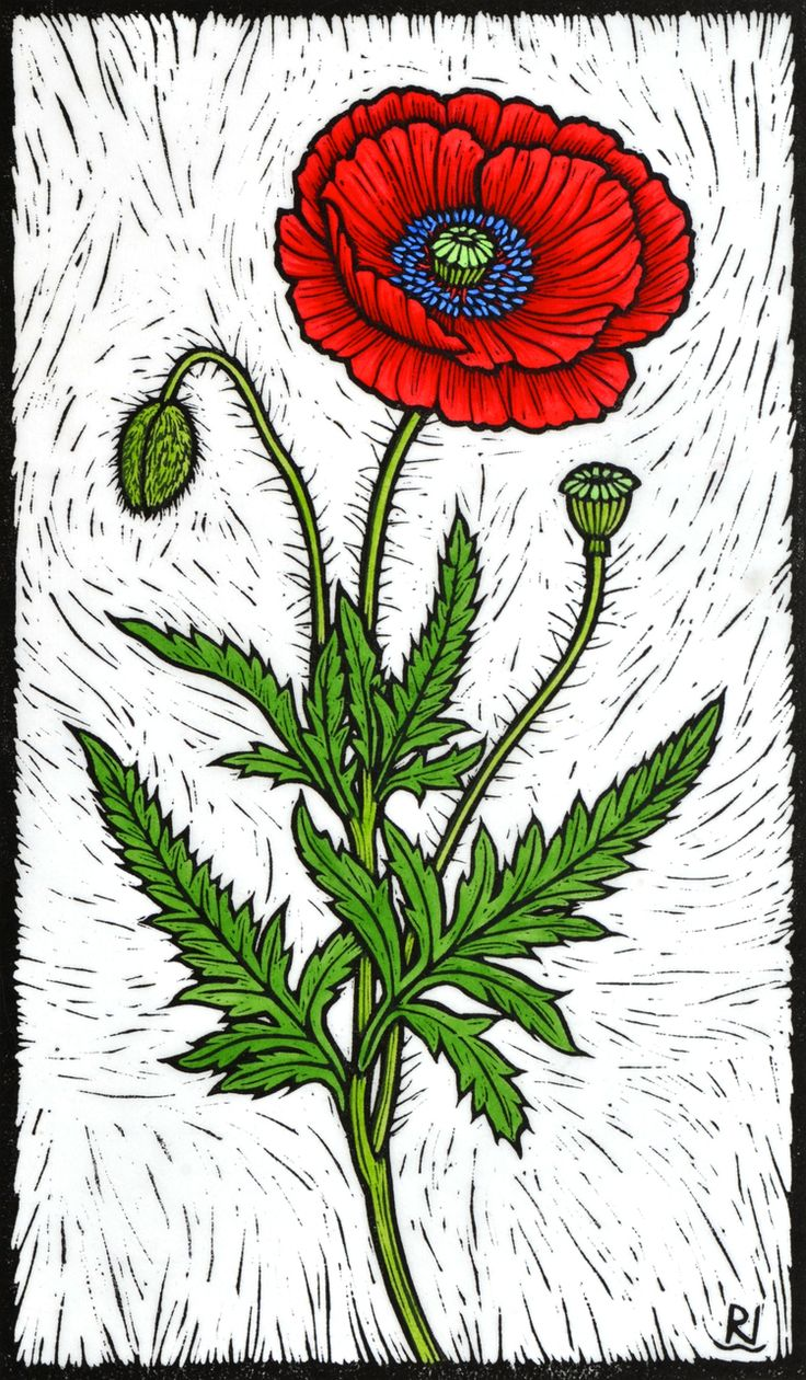 Rachel Newling Australian Contemporary Artist And Printmaker