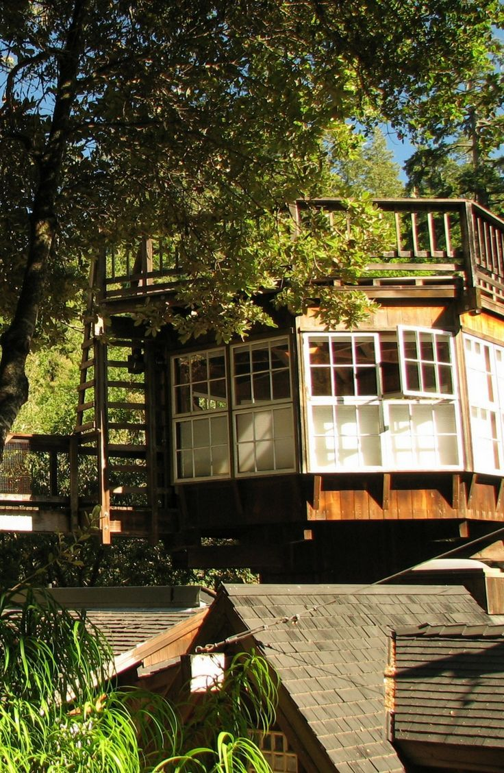 Discover this luxury tree house getaway near San Francisco, California, for the ultimate vacation!