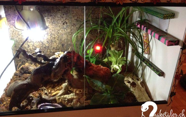 Kinderstube 60 x 30 x 40 cm aus der Dinozeit nur mit bunten Kletterbalken | UVA Lampe und Heizmatte | Rückwand aus Kork