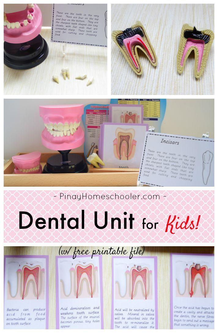184 Best Dental Health Preschool Images On Pinterest Dental