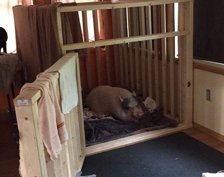 47 best indoor housing examples images on pinterest for Indoor pig pen ideas