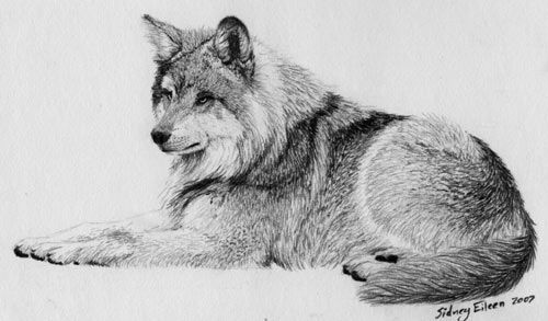 How to draw: fur.