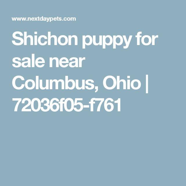 Shichon puppy for sale near Columbus, Ohio | 72036f05-f761