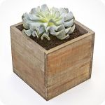 Palavo Succulent is a modern way to decorate your office and remind you of taking some time off. $65.