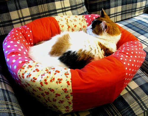 homemade cat bed by rothenminj, via Flickr