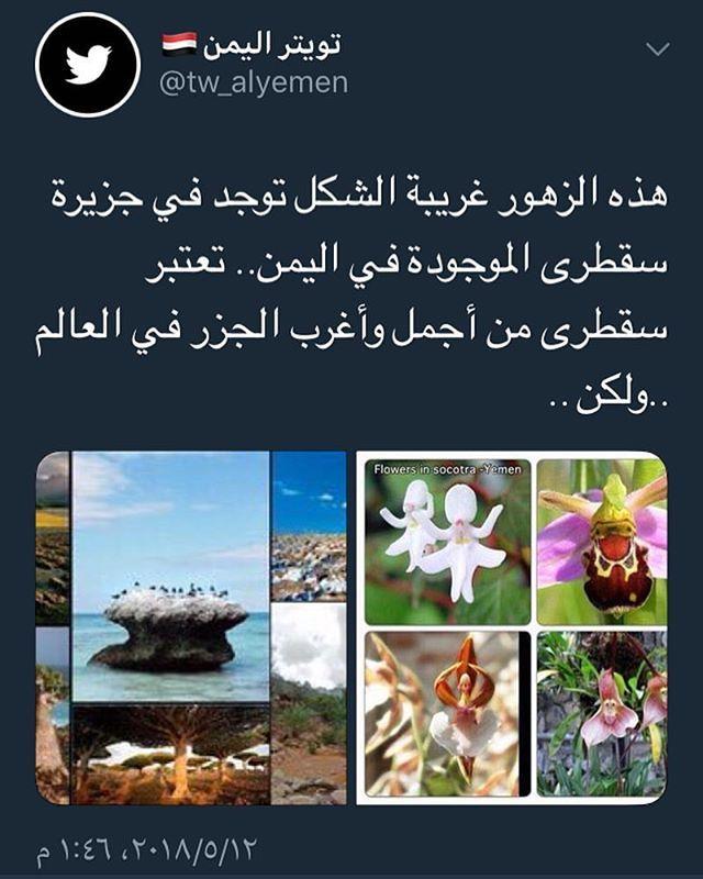 تابع ليصلك كل جديد Tw Alyemen سقطرى اليمن اليمن اليمن عشقي اليمن اجمل اليمن السعيد اليمن بعين مواطنها اليمنيين Socotra Poster Flowers