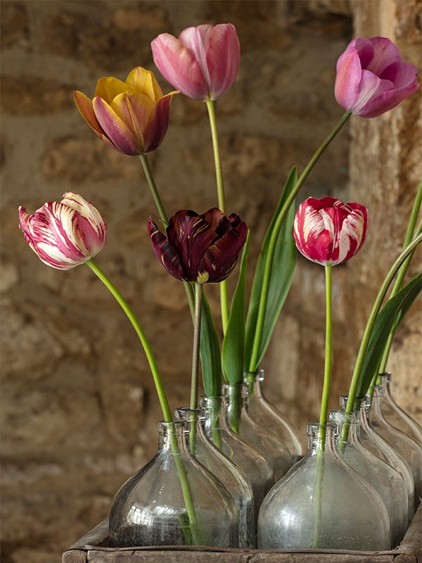 Tulipmania The History And Heritage National Garden Scheme In 2020 Tulips Glass Vase Mabel