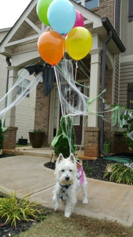 This house from Up. | 19 Dog Halloween Costumes That Are Actually Borderline Genius