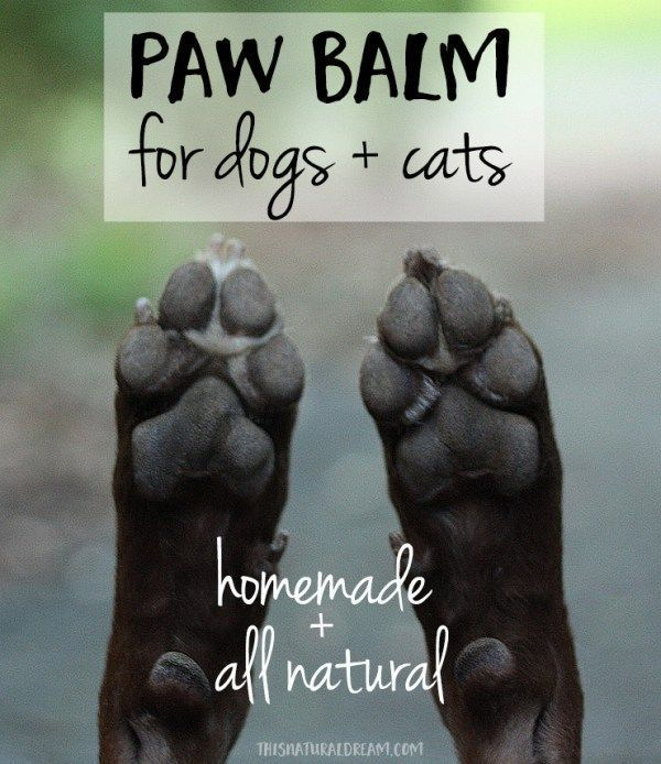 Easy homemade Paw Balm for Dogs and Cats -  We love this all natural DIY paw balm for our dog's rough paws. #DIY #pets #paws