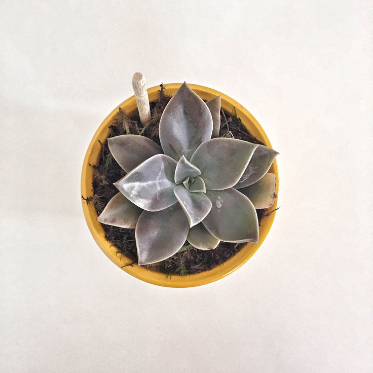 #succulents #lifestyle #flowers #nature #decoration #homedecor #succulentsofinstagram
