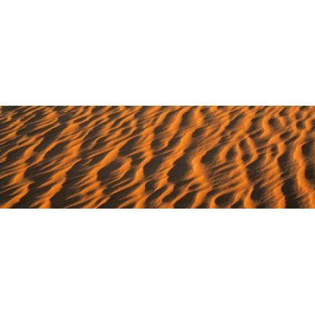Wind blown Sand TX USA Canvas Art - Panoramic Images (36 x 12)