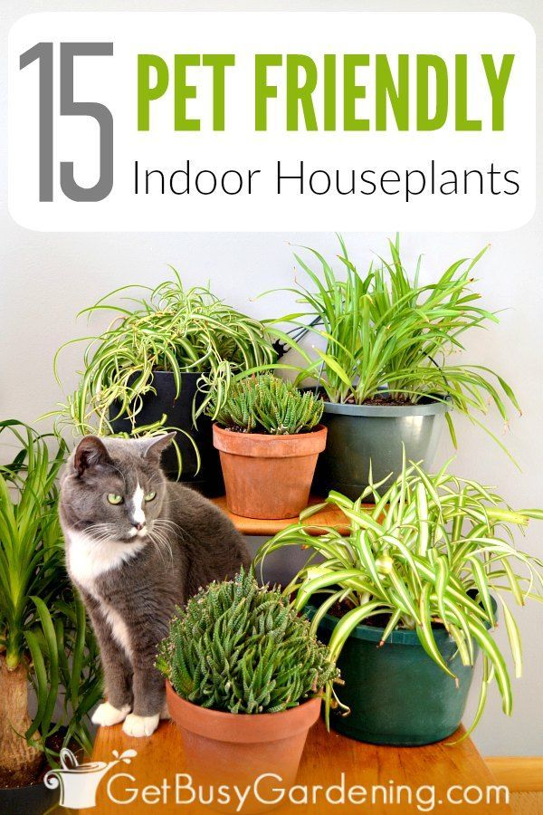15 Indoor Plants That Are Safe For Cats And Dogs Cat Safe Plants