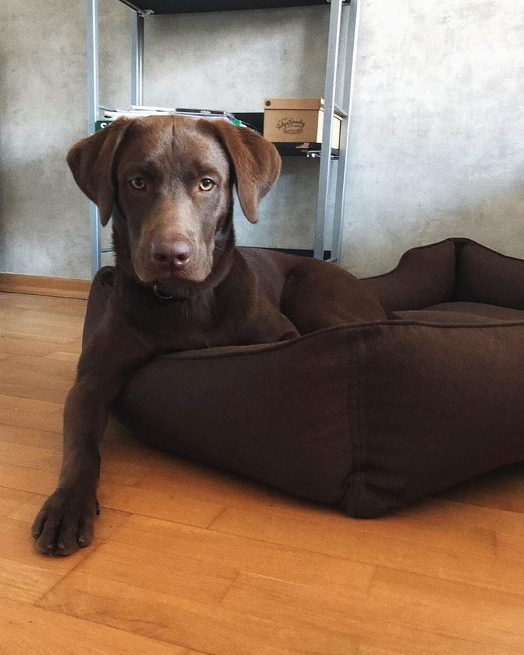 Brown dog mat removable cover durable machine washable