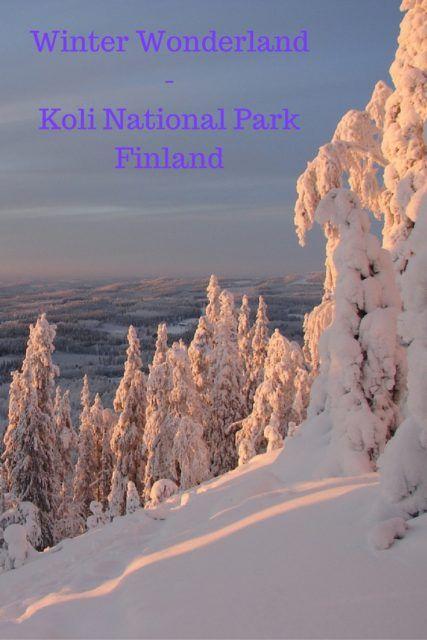 Winter Wonderland: Koli National Park, Finland