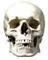 Skull Face Mask Card Cutout Eyes