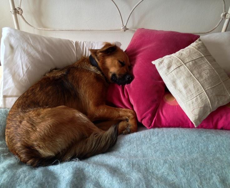 Jo-Jo love pillows