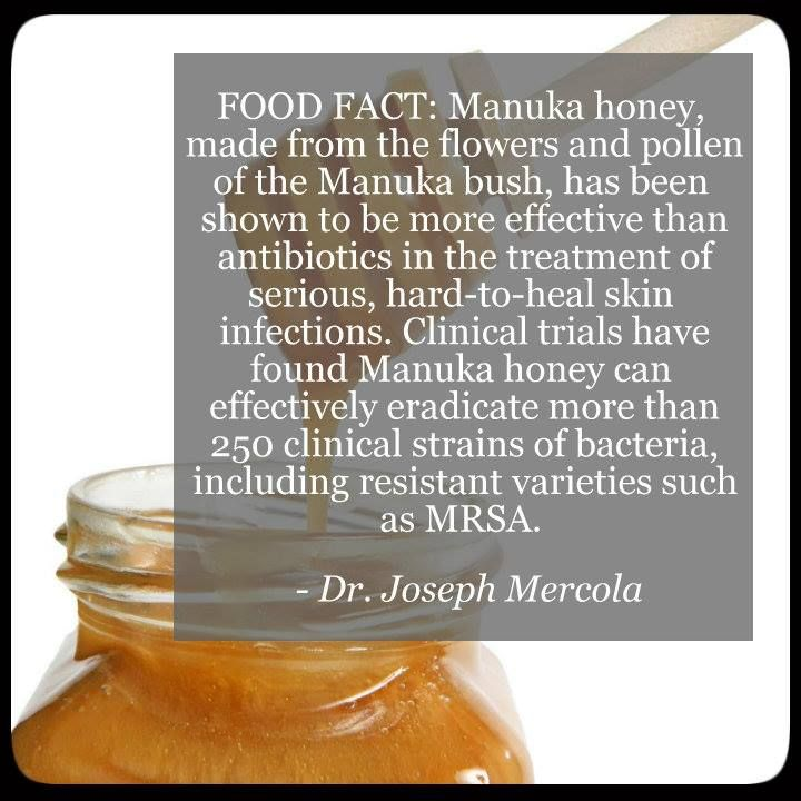 46 best images about new zealand bioactives on pinterest christmas trees new zealand and mussels - Benefits of manuka honey the natural antibiotic ...