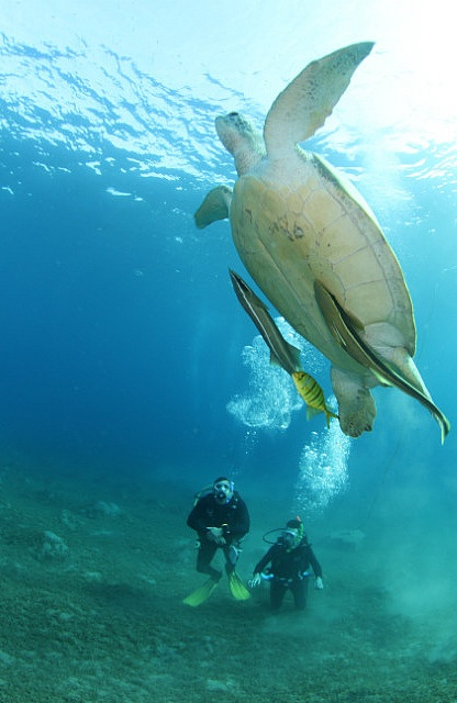 http://www.TravelPod.com - Cours scuba diver by TravelPod member Emeric.bensaci, from Naama, Egypt