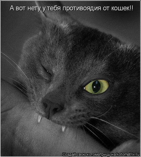 Картинки коты вредные с надписями