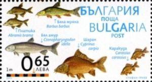 Freshwater Bream, Barbel, Grass Carp, Common Carp, Crucian C