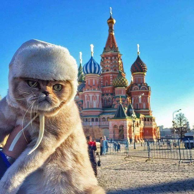 Картинки хочу в россию