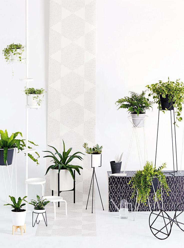 190 best indoor hanging plants images on pinterest. Black Bedroom Furniture Sets. Home Design Ideas