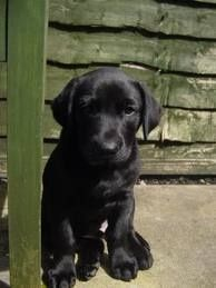 <3 <3 My favorite:  Labrador Retriever Puppies