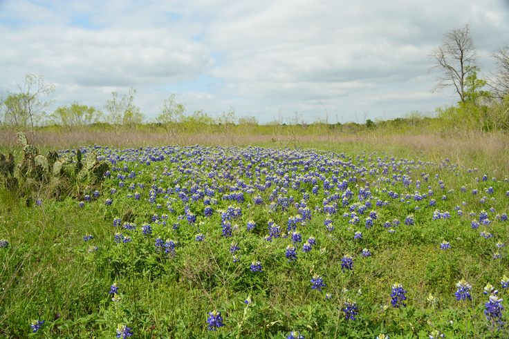 HUNTING / RECREATIONAL / COMMERCIAL LAND FOR SALE in Cedar Creek, Bastrop County, Texas. 806 acres of fertile soil, large mature trees, a 5-acre lake, and wonderful wildlife, with road frontage on FM 812 and Hwy 21.