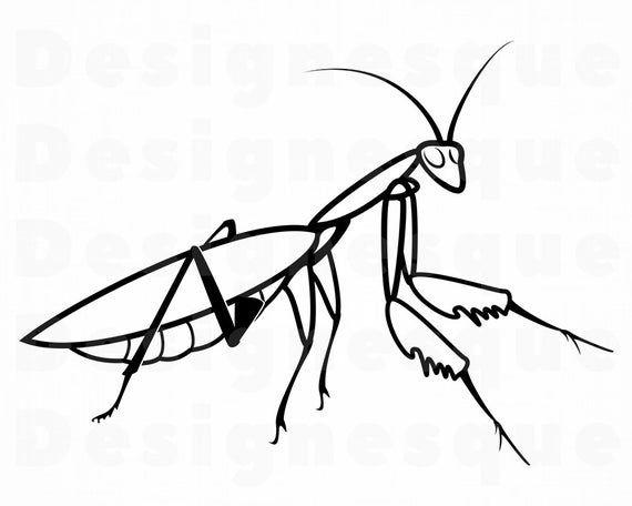 Praying Mantis Outline Svg Grasshopper Svg Cricket Svg Etsy In 2021 Praying Mantis Clip Art Pray