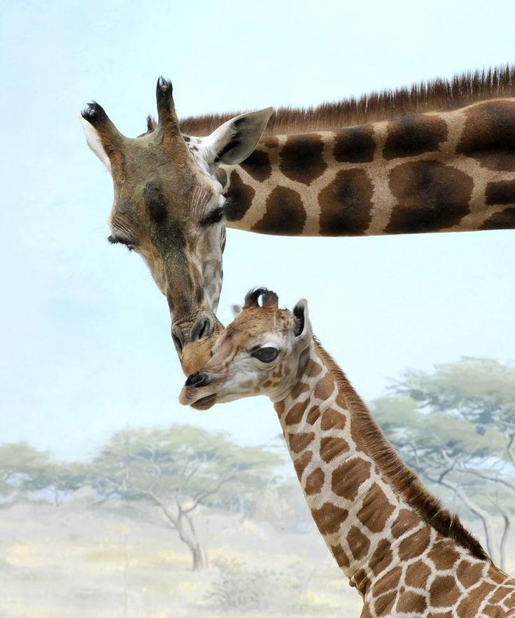 19 best Bronx Zoo images on Pinterest | Bronx zoo, The zoo ... Bronx Zoo Animals