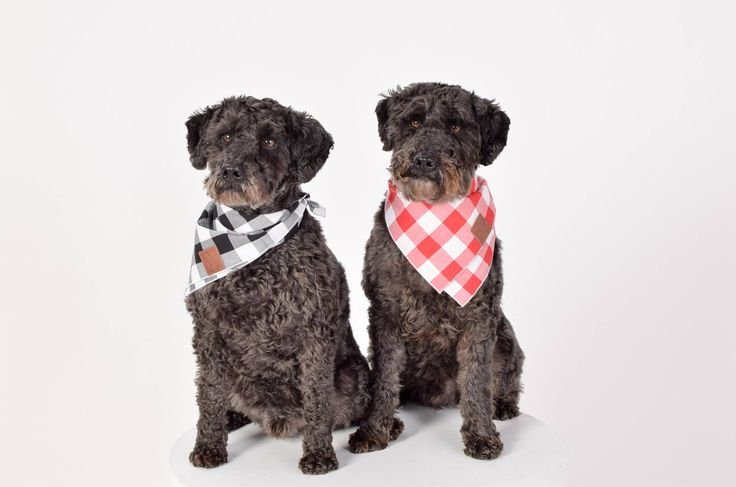 Contemporary dog products. Located in Wellington, New Zealand. Wolves of Wellington is a pet lifestyle brand, onlineshop and community Worldwide shipping.