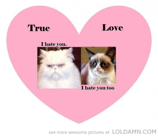 Grumpy Cat/valentines Day Pics | Funny Grumpy Cat Valentines Day