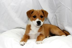 224 Best Mixed Breed Beauties Images On Pinterest