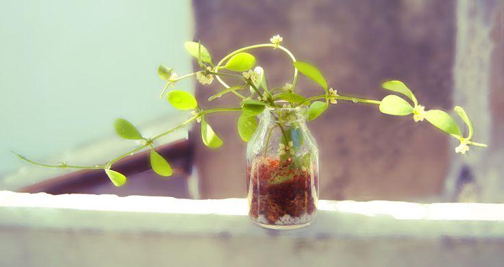 liti flowers
