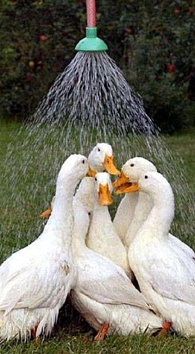 Save water...shower with a friend