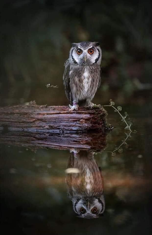 Pin De Lidia Gauna En Practicos Ecologicos Aves De Rapina Buhos