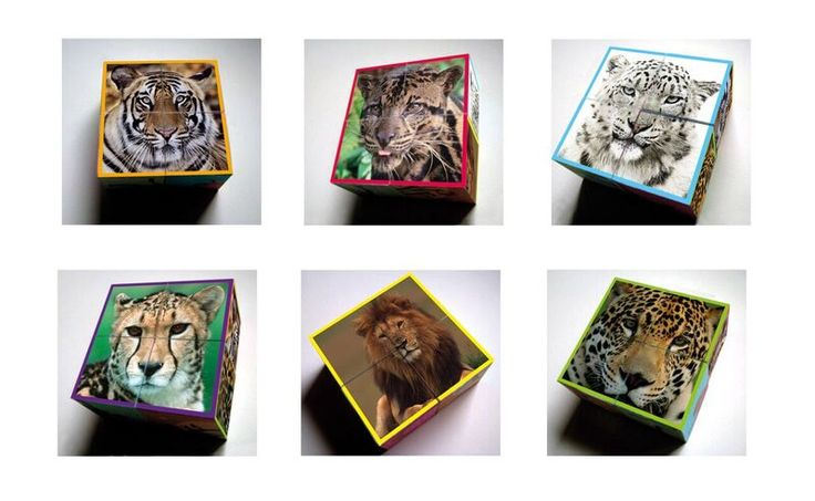 WWF Wild Cats Block Puzzle. This is six Puzzles in one. Its extra large size is easy for little hands to grab to work out the puzzle.  These sturdy block pieces stack neatly and easily. Each block features beautiful photos of diverse wild cats from Award-winning WWF photographers.