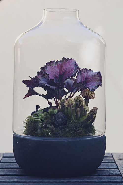 Terrarium with purple plant #terrarium - for those dull but mysterious Board Rooms