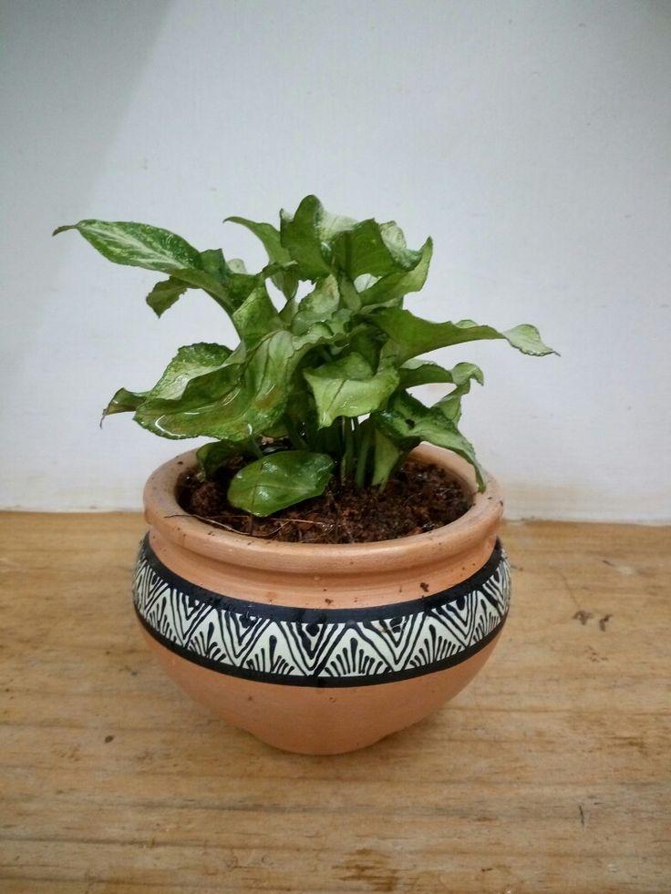 Pin By Haritharang Garden On A Balcony Make Over Ornamental Plants Planter Pots Tea Table