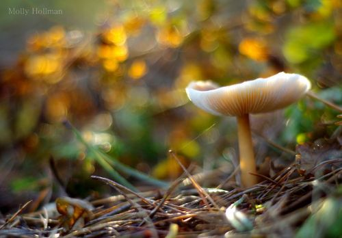 Mushroom at sunset