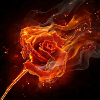 A special rose of fire for a special woman who's set my heart ablaze