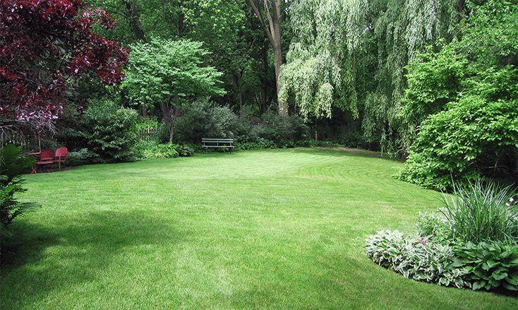 Зеленая лужайка. #газон #lawn #лужайка #сад #дача #трава