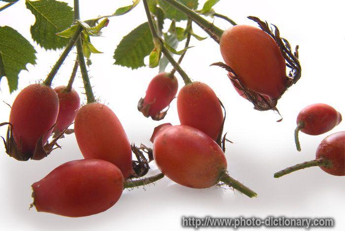 Βότανα, αιθέρια έλαια, εναλλακτικές θεραπείες, συνταγές υγείας και ομορφιάς.