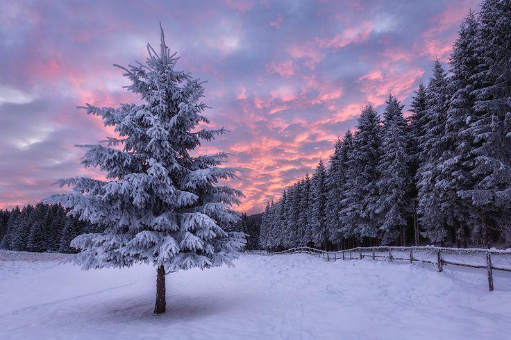 Pian del Cansiglio @ Andrea Livieri  #cansiglio #dolomiti #dolomites #bosco #foresta #woods #trees #alberi #canon #canon6d #6d #fullframe #alba #colori #natura #sole #inverno #neve #alba #winter #nuvole #veneto #italy #italia #landscape #paesaggio #photography #fotografia #landscapes #landscape #manfrotto #outdoorphotography #outdoor #snow