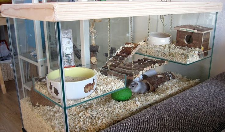 How to Set Up a Gerbil Cage picture