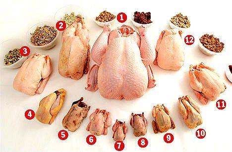 carnes,aves,comestibles,pollo,negro,faisán,paloma,becada,pularda,picantón,coquelet,gallina,Guinea,pato,pluma,pintada,faisán,caza,grano,tipos,clases,ganso