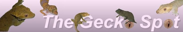 Leopard Gecko Caresheet | The Gecko Spot